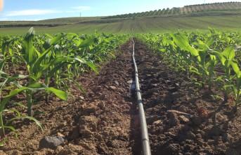 imagen de un Almacenaje de grano